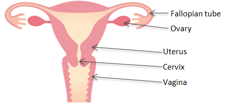 Hysterectomy: labelling